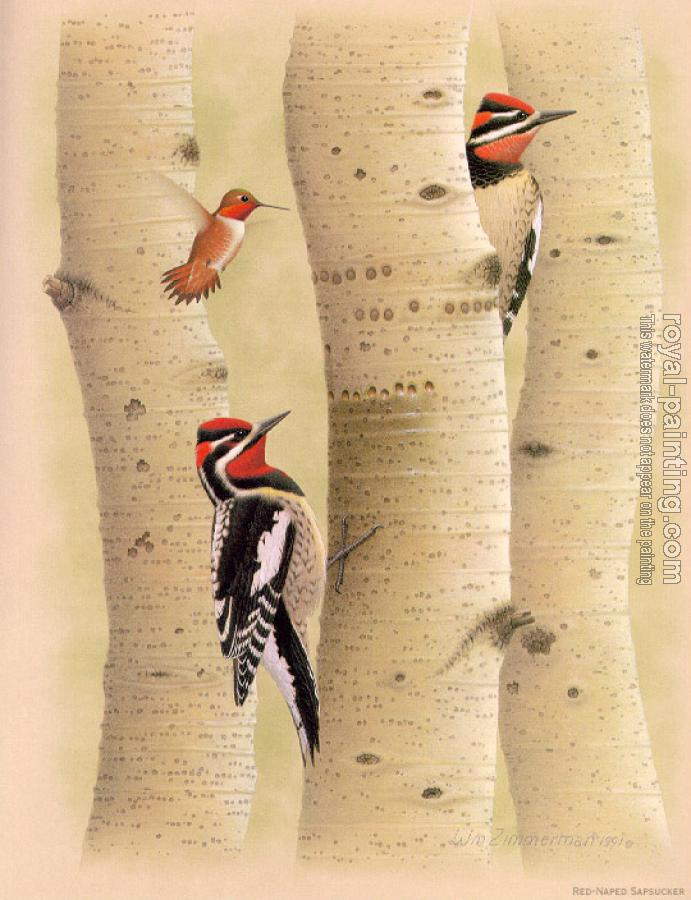 William Zimmerman : Red-napped Sapsucker